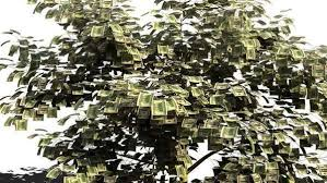 MNR Money Tree